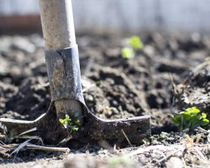 tuin aanleg small